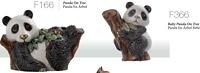 Baby panda, F366. DeRosa-Rinconada