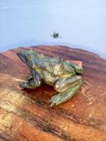 Moreno Art Studio - Bronzener Frosch